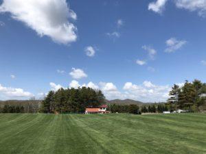 芝生がきれい!